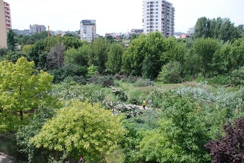 Parcul Tineretului din Capitală nu poate fi defrişat. Decizia instanţei vine însă după ce peste 200 de copaci au fost tăiaţi