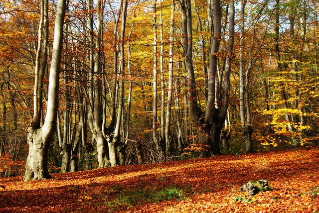 Dosarul Retrocedării pădurilor către biserici. Falsuri și abuzuri. Cazul Mănăstirii Neamț (Raport Curtea de Conturi)