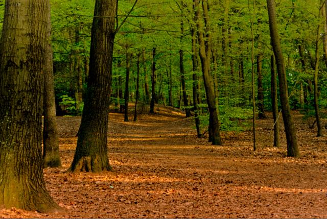 Decizie definitivă a justiției. Cele 166.000 ha pădure revendicate de Biserică în Bucovina rămân la stat