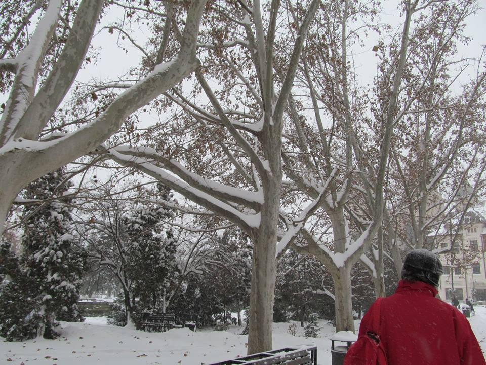 antonesei parc 4