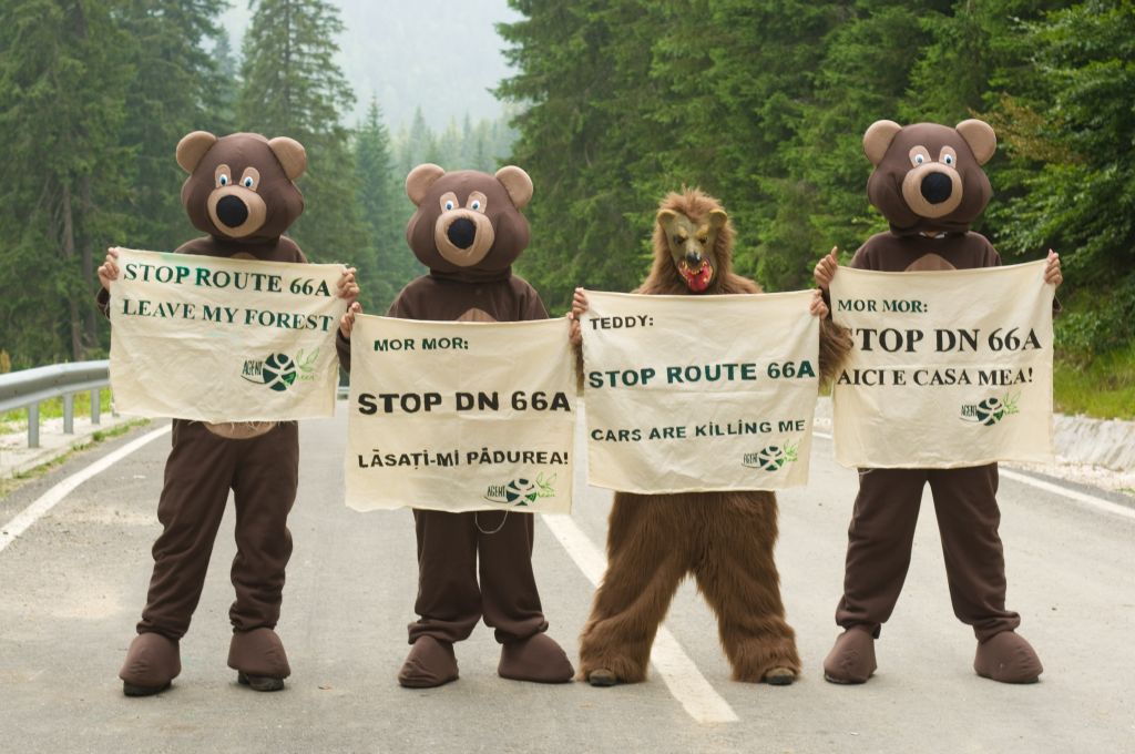 Acțiune în Retezat, în încercarea de a stopa drumul național inutil, dar care distruge două parcuri naționale