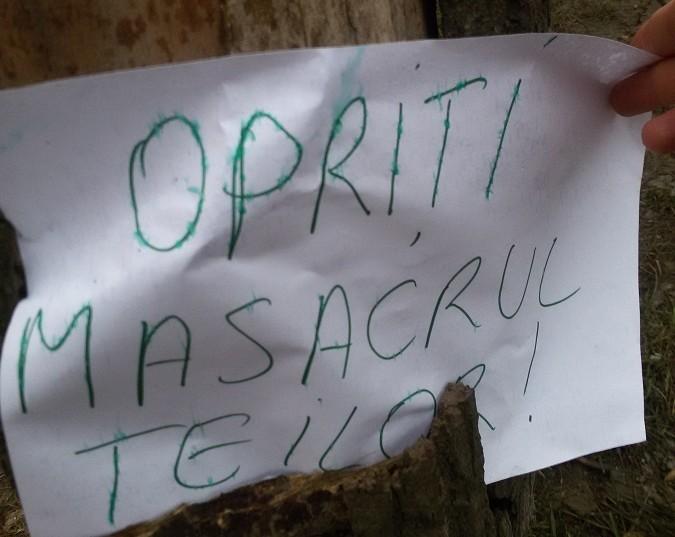 """Primăria a însemnat copacii să-i taie, ieşenii i-au marcat cu mesaje împotriva primarului. """"Opriți masacrul teilor"""""""