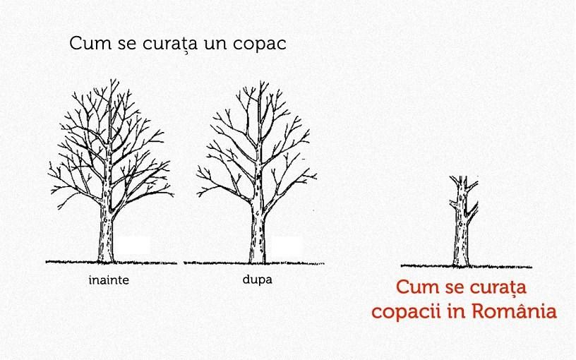 cum se curata un copac