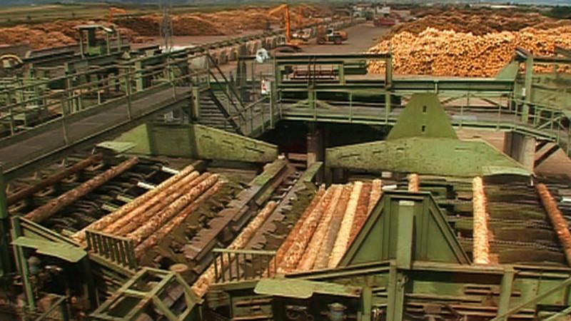 Reexaminarea Codului Silvic, solicitată de Klaus Iohannis, îi irită peapărătorii pădurilor. Favorizează președintele marele exploatator Holzindustrie Schweighofer?