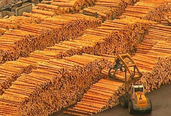 ALARMANT: România riscă să fie dată în judecată de CE din cauza tăierilor ilegale de lemn și a Schweighofer. Ministerul Mediului are termen până pe 2 decembrie pentru a prezenta măsuri concrete