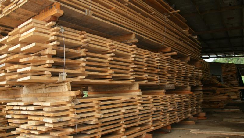 DEZBATERE: Ce prevăd ordonanțele de urgență anunțate de Ponta, privind exportul de masă lemnoasă. Citește textul ordonanțelor și notele de fundamentare