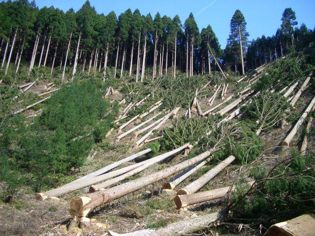 Guvernul a înființat Garda Forestieră. Cu cât crește numărul persoanelor cu atribuții de control silvic și cât de mult lemn se fură la ora actuală – cifre oficiale