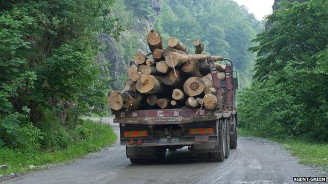 """BBC: """"UE trebuie să-și facă mai multe griji pentru lemnul tăiat ilegal în România, decât pentru cel tăiat ilegal în pădurile tropicale"""""""