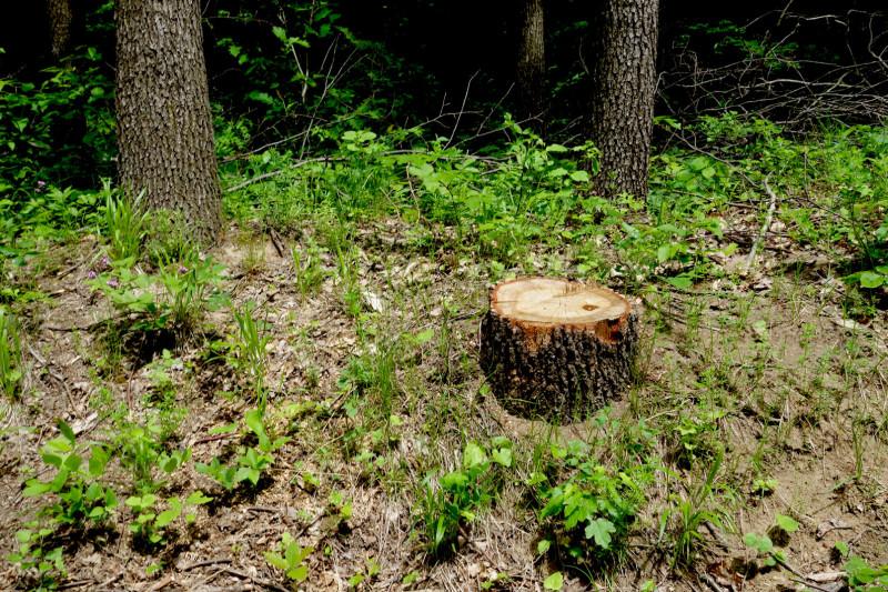 Compensații de 500 euro/hectar pentru proprietarii de păduri care nu le taie