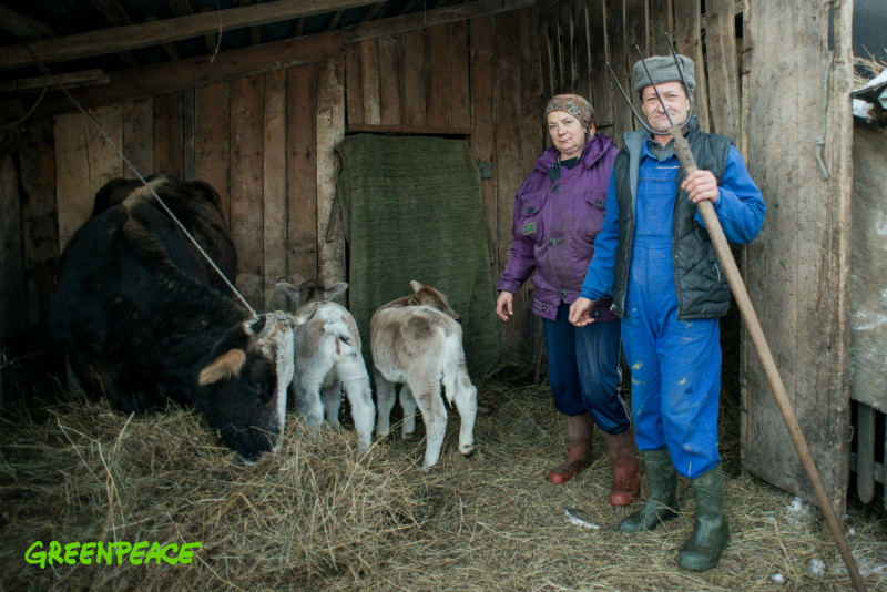 Greenpeace a inițiat o petiție prin care cere oprirea exproprierilor abuzive din satul Runcurel, județul Gorj