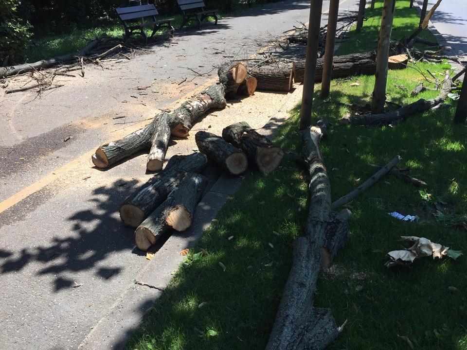 copaci taiati 2
