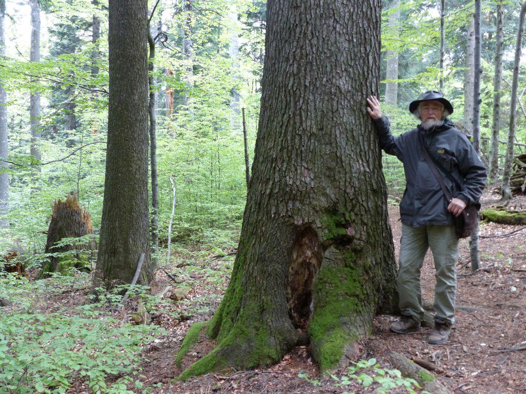 Hans D. Knapp, în pădurile României, cu ocazia vizitei din acest an