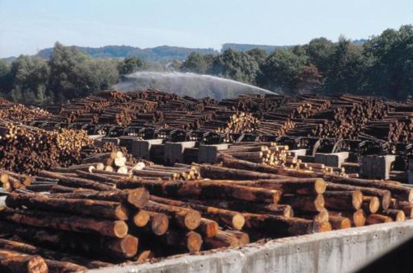 """Mihai Goțiu cere Guvernului Grindeanu să ia măsuri după ce s-a dovedit că """"cel mai mare consumator de lemn al României"""" nu respectă standardele de mediu"""