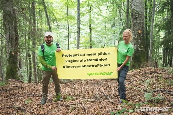 """PROTEST în creierii munților, pe lacul Vidraru. """"STOP tăierilor de arbori din pădurile virgine (VIDEO ȘI FOTO). Semnează și tu petiția adresată ministrului Mediului!"""