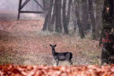 Balastierele, cea mai mare amenințare pentru biodiversitate în Parcul Natural Lunca Mureșului