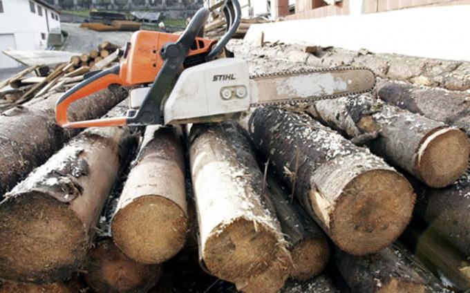 Greenpeace: Pericolul birocrației planează asupra legii contravențiilor silvice
