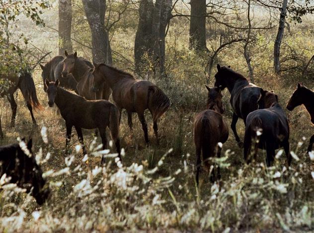 Caii sălbatici din Deltă distrug Pădurea Letea. Ce măsuri iau autoritățile