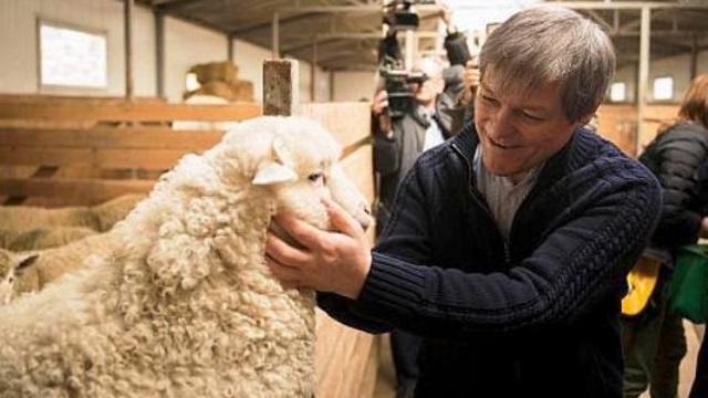 Cioloș are șanse doar dacă vine cu arca lui Noe într-o țară unde, orice ai face, conduc porcii