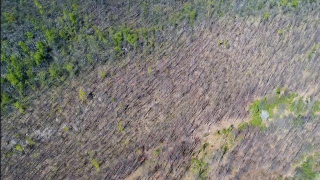 EXCLUSIV. Agent Green publică dimensiunea exploatărilor criminale din Parcurile Naționale din România