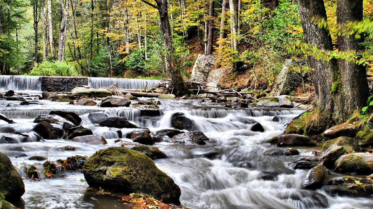 ONG-urile din Serbia contestă proiectul de regularizare a râului Bârzava