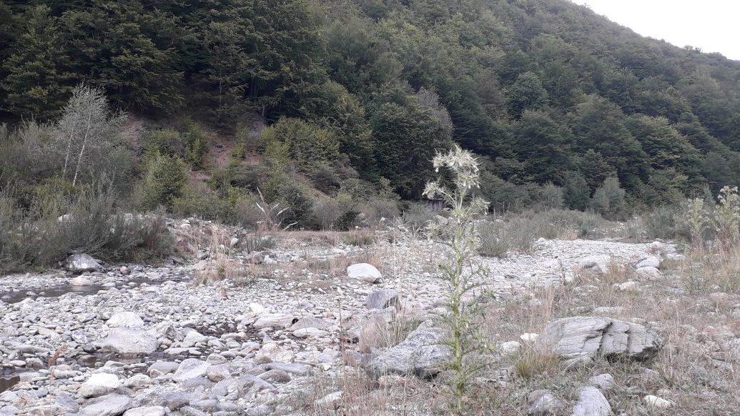 Unii parlamentari vor să crească mărăcini pe albiile râurilor carpatine