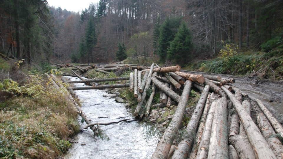 Blog de parlamentar – Mihai Goțiu: condițiile pe mediu pentru susținerea noului Guvern