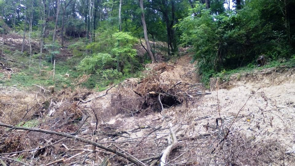 REVOLTĂTOR: Cu drujba și TAF-ul prin pădurile virgine din Caraș, aflate în procedură de includere în Patrimoniul UNESCO. ATENȚIE: galerie foto dureroasă!