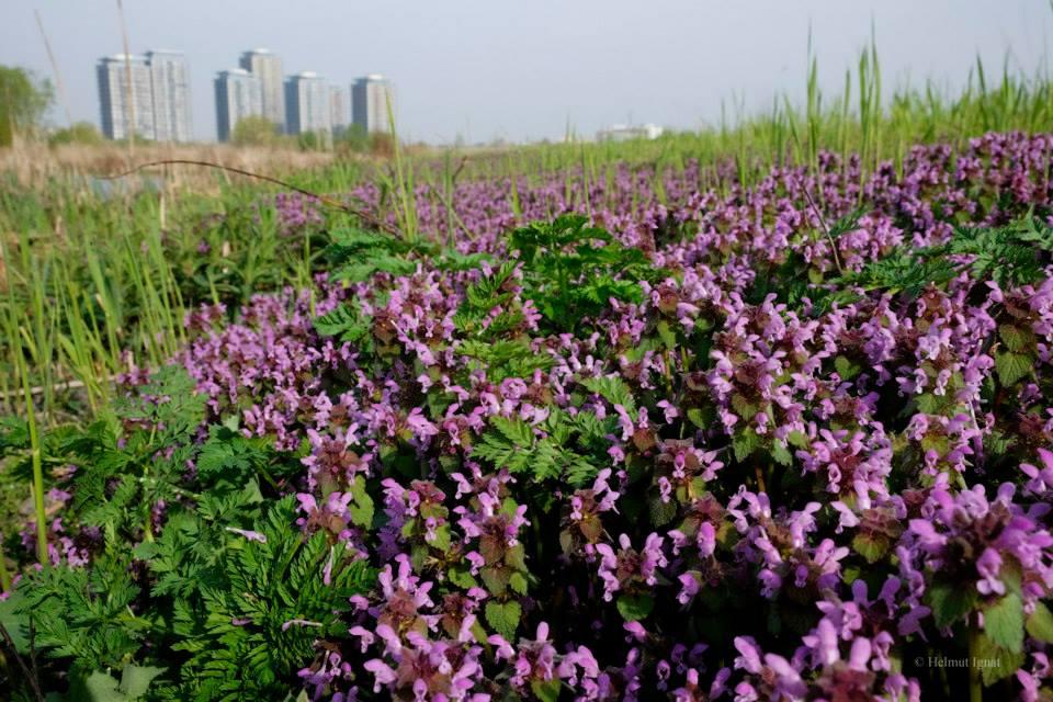 Sute de hectare de teren scump din București au devenit invizibile. Doar samsarii imobiliari le pot vedea