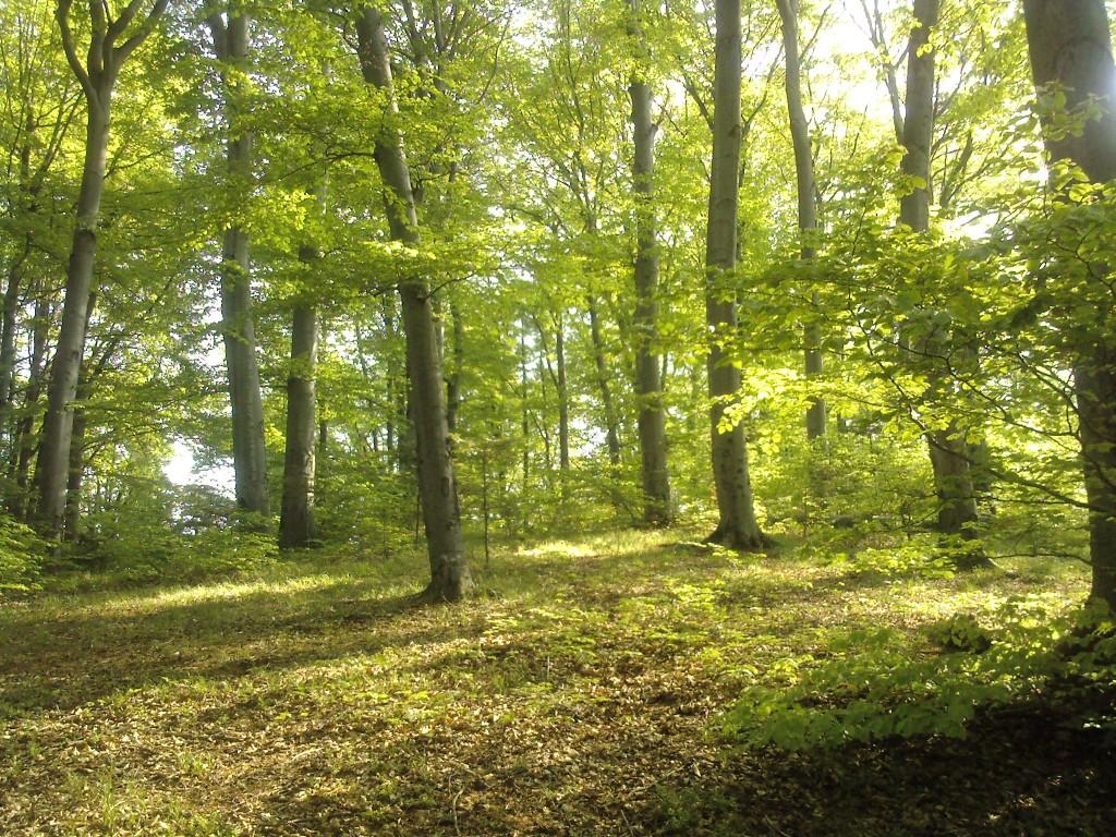 Liber la drujbă în Coşava Mică. 700 de hectare de pădure virgină, scoase din pix de pe lista UNESCO