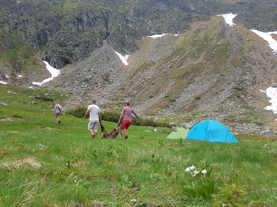 16.000 de euro pentru o capră neagră braconată în munţii Rodnei