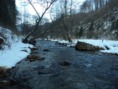 Încă un râu mutilat de pesta MHC ar putea fi salvat