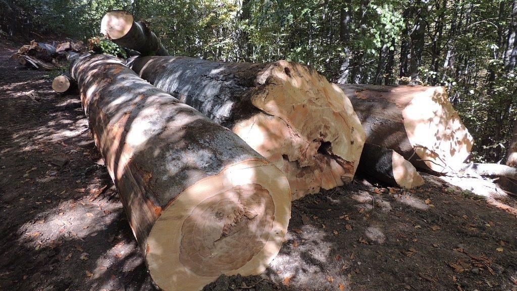 Blog de parlamentar: Desființarea Gărzii Naționale Forestiere, blocată în comisiile din Senat. NU AȘA se stopează tăierile ilegale de păduri!