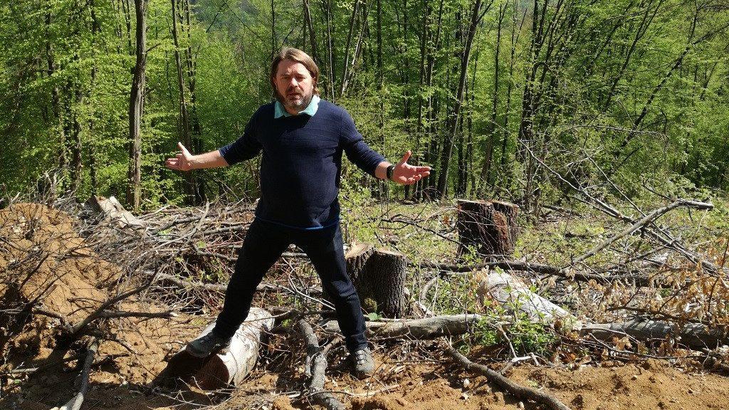 Blog de parlamentar: Guvernul Orban încearcă să blocheze DNA-ul pădurilor la Senat