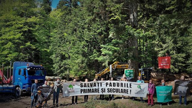 Protest: Agent Green expune jaful din pădurile seculare din Bucegi de ziua Europeană a Parcurilor