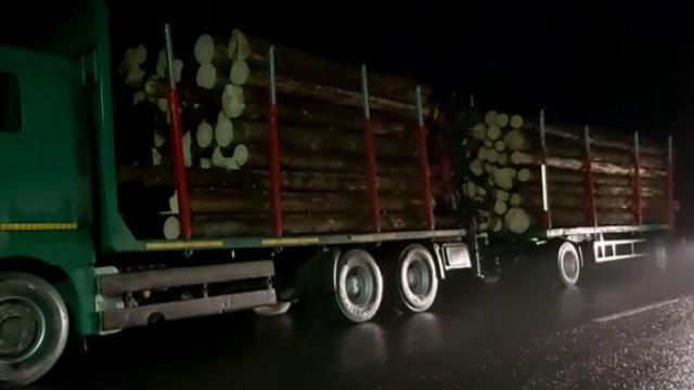 Mafia lemnului continuă cu falsul în acte
