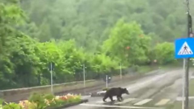 Ce facem cu invazia urșilor